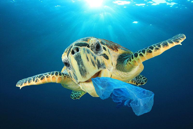 la lucha contra los plásticos