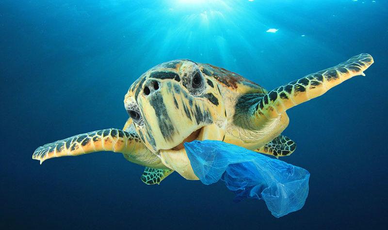 Lucha contra los plásticos en el Día Mundial del Medio Ambiente 2018