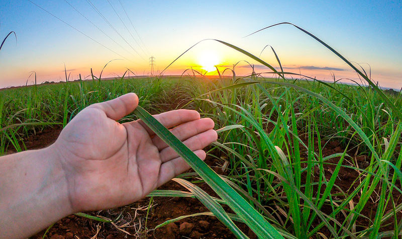 El futuro de la industria plástica está en las plantas